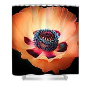 Poppy In The Darkness Shower Curtain