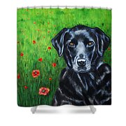 Poppy - Labrador Dog In Poppy Flower Field Shower Curtain