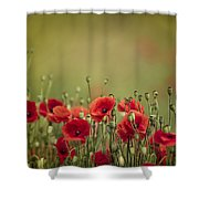Poppy Meadow Shower Curtain by Nailia Schwarz