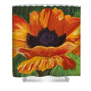 Poppy Number 2 Shower Curtain