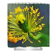 Poppy Seed Capsule 2 Shower Curtain by Kaye Menner