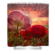 Poppy Sunrise Shower Curtain by Debra and Dave Vanderlaan