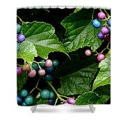 Porcelain Berries Shower Curtain