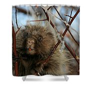 Porcupine And Berries Shower Curtain