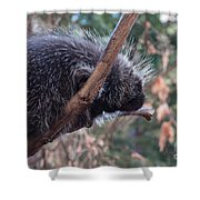 Porcupine Shower Curtain