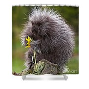 Porcupine With Arrowleaf Balsamroot Shower Curtain