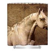 Portait Of A Stallion Shower Curtain
