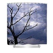 Portending Shower Curtain