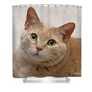 Portrait - Orange Tabby Cat Shower Curtain