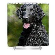Portrait Black Curly Coated Retriever Dog Shower Curtain