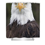 Portrait Of A Bald Eagle In Gaspesie Shower Curtain