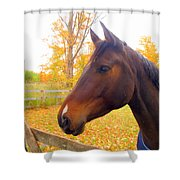 Portrait Of A Beauty Shower Curtain