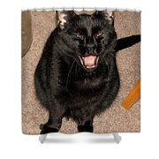 Portrait Of A Black Shorthair Cat With Open Mouth Shower Curtain