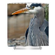 Portrait Of A Blue Heron Shower Curtain