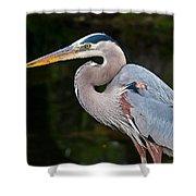 Portrait Of A Blue Heron Shower Curtain