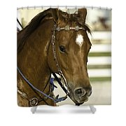 Portrait Of A Brown Horse Shower Curtain