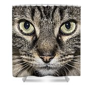 Portrait Of A Cat Shower Curtain