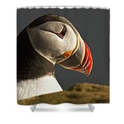 Portrait Of A Colorful Puffin Iceland Shower Curtain