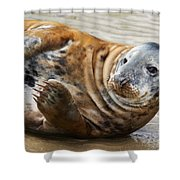 Portrait Of A Common Seal  Shower Curtain