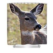 Portrait Of A Deer Shower Curtain