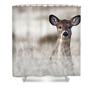 Portrait Of A Fawn Shower Curtain