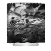 Portrait Of A Finch Shower Curtain