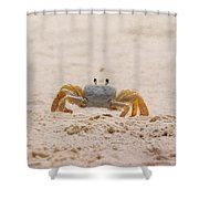 Portrait Of A Ghost Crab Shower Curtain