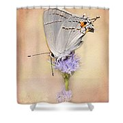 Portrait Of A Gray Hairstreak Shower Curtain