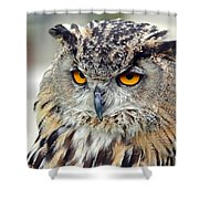 Portrait Of A Great Horned Owl II Shower Curtain