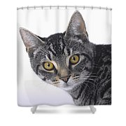 Portrait Of A Grey Tabby Catvancouver Shower Curtain