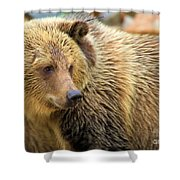 Portrait Of A Grizzly Shower Curtain