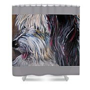 Portrait Of A Happy Shaggy Dog Shower Curtain