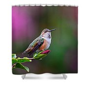 Portrait Of A Hummer 2 Shower Curtain