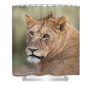 Portrait Of A Lioness, Panthera Leo Shower Curtain