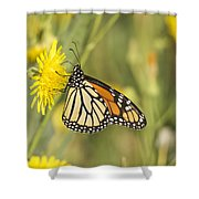 Portrait Of A Monarch Shower Curtain