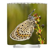Portrait Of A Morning Dew Butterfly Shower Curtain