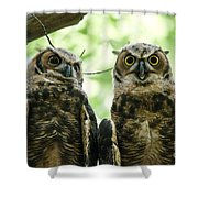 Portrait Of A Pair Of Owls Shower Curtain