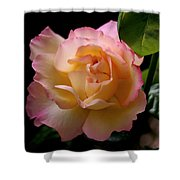 Portrait Of A Rose Shower Curtain by Rona Black