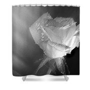 Portrait Of A Rose Shower Curtain