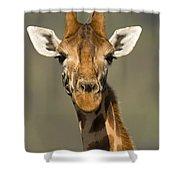 Portrait Of A Rothchilds Giraffe Shower Curtain