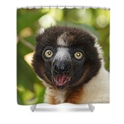 portrait of a sifaka from Madagascar Shower Curtain