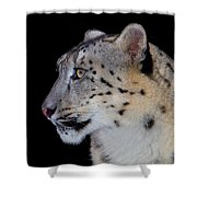 Portrait Of A Snow Leopard Shower Curtain
