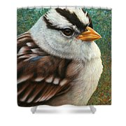 Portrait Of A Sparrow Shower Curtain by James W Johnson