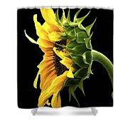 Portrait Of A Sunflower Shower Curtain