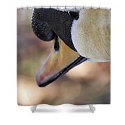 Portrait Of A Swan Shower Curtain