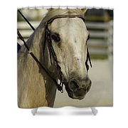 Portrait Of A Tan Horse Shower Curtain