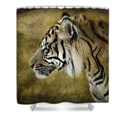 Portrait Of A Tiger  Shower Curtain