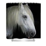 Portrait Of A White Horse Shower Curtain