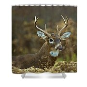 Portrait Of A White Tailed Buck Shower Curtain