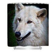 Portrait Of A White Wolf Shower Curtain